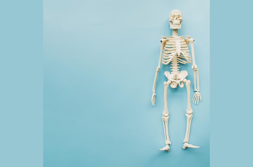 tulang_kerangka_manusia