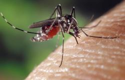 Beda Demam Berdag dan demam Berdarah Dengue