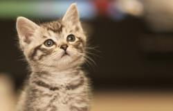 kucing_tidak_sebabkan_tokso