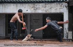 menyelamatkan_hewan_saat_banjir