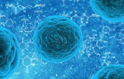 stem_cell_sel_punca